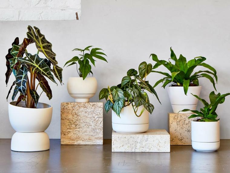 piante da appartamento verdi vasi di ceramica bianca con piattini