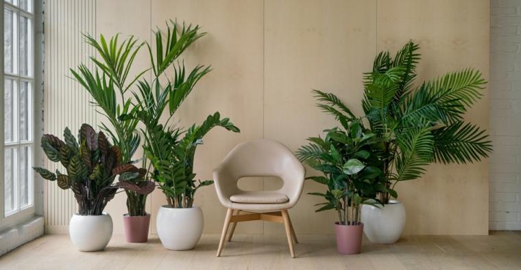 piante da interno foglia larga vaso con pianta dalla foglia verde