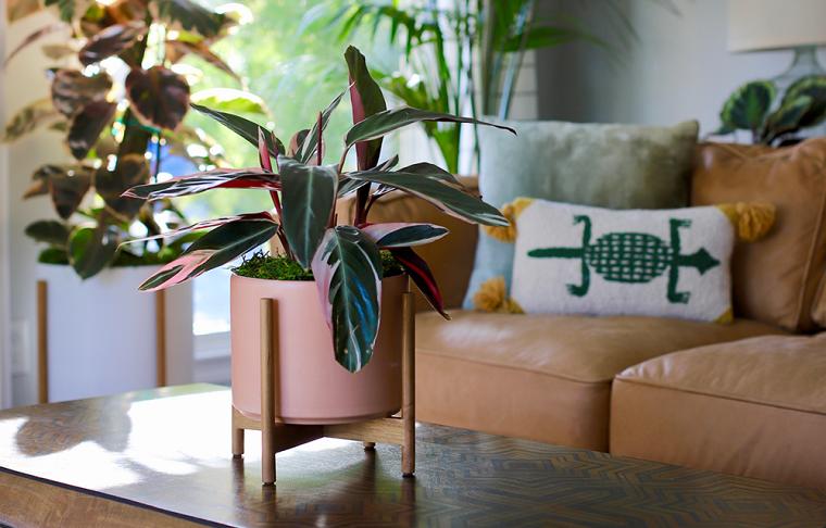piante da interno resistenti soggiorno decorato con vasi di ceramica colorata