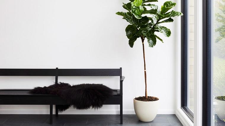 piante eleganti da appartamento entrata di casa con panchina di legno pianta con foglie verdi