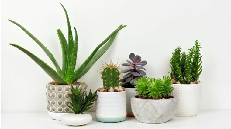 piante eleganti da appartamento vasi con piante grasse succulenti