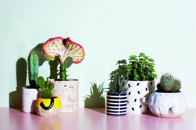 piante grasse composizioni originali vasi con succulente cactus e aloe vera