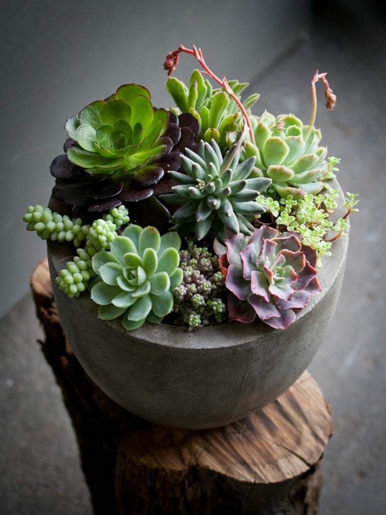piante grasse composizioni originali vaso di cemento con succulente