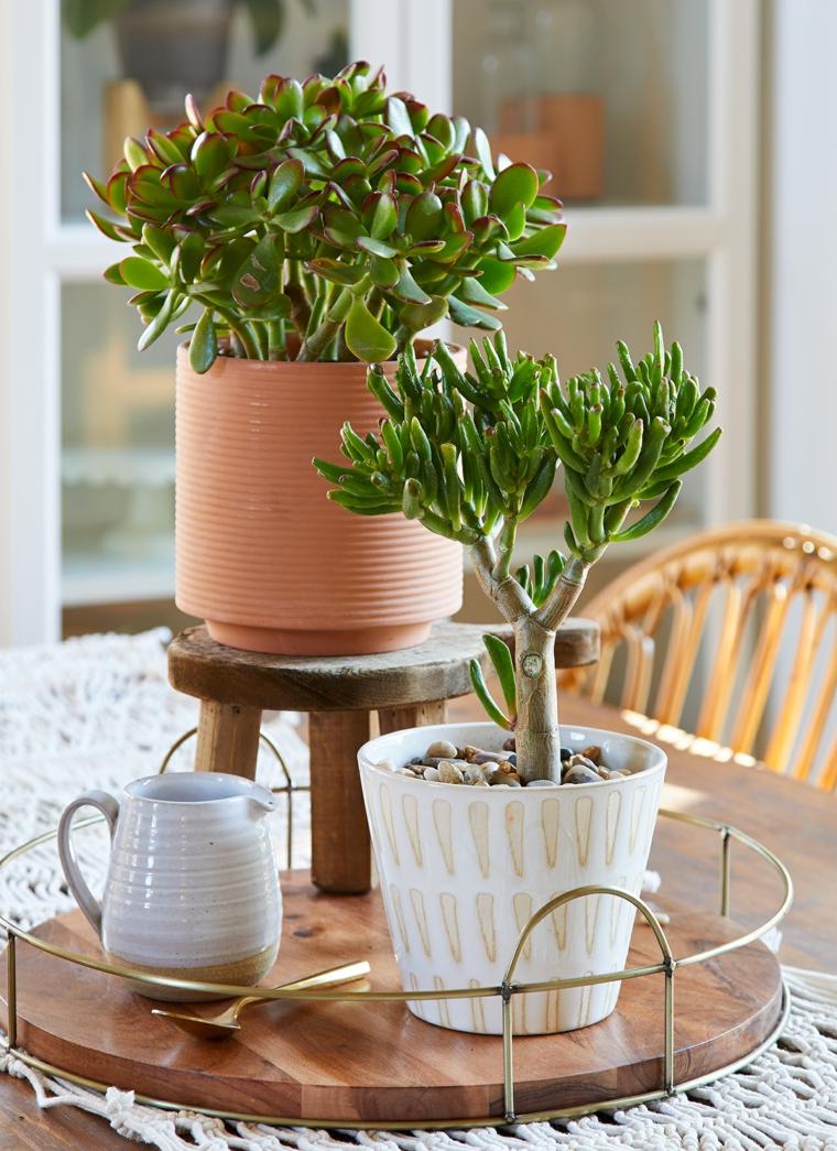 piante grasse con fiori tavolino decorato con vasi di succulente