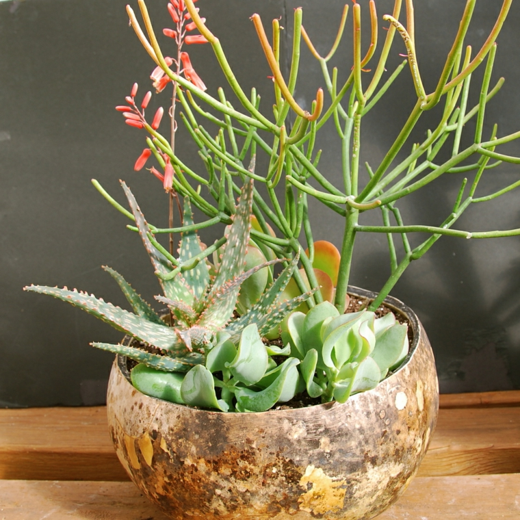 piante grasse da appartamento vaso rotondo di legno con succulente