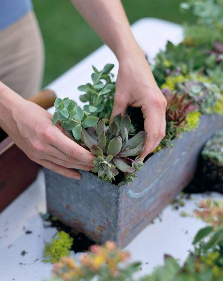 piante grasse da balcone donna che trapianta piantine succulente verdi
