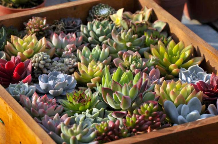 piante grasse da esterno che fioriscono contenitore di legno con succulente