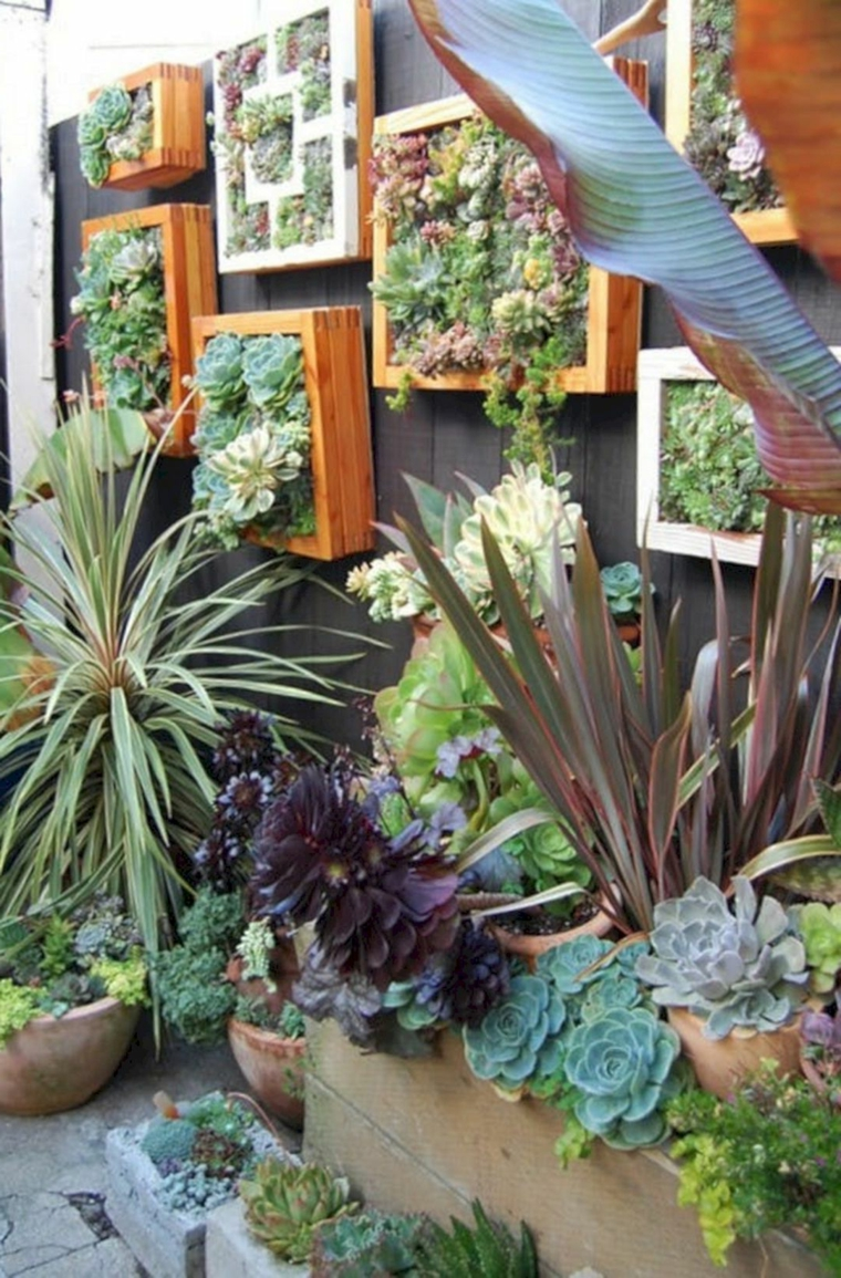 piante grasse da esterno che fioriscono giardino verticale con succulente