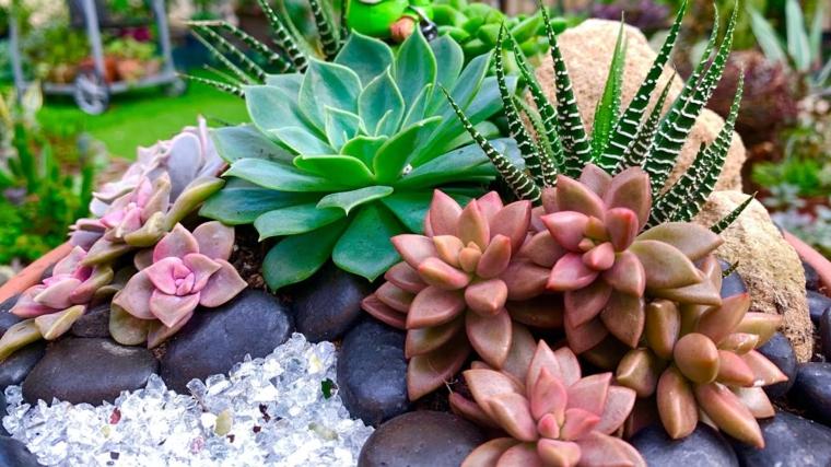 piante grasse da esterno come curarle giardino roccioso con succulente