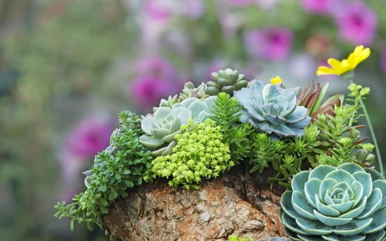 piante grasse da esterno giardino roccioso con succulente di vario colore