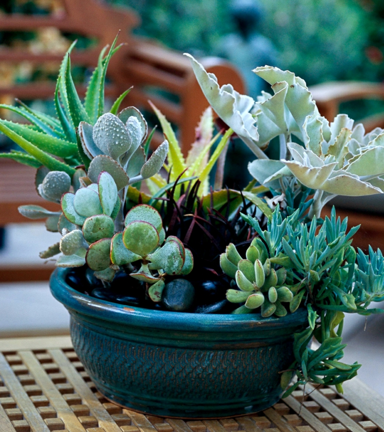 piante grasse da esterno vaso di ceramica con succulente di varie specie