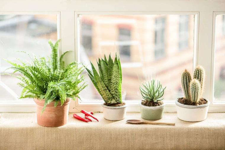 piante grasse da interno davanzale finestra decorato con vasi di succulente