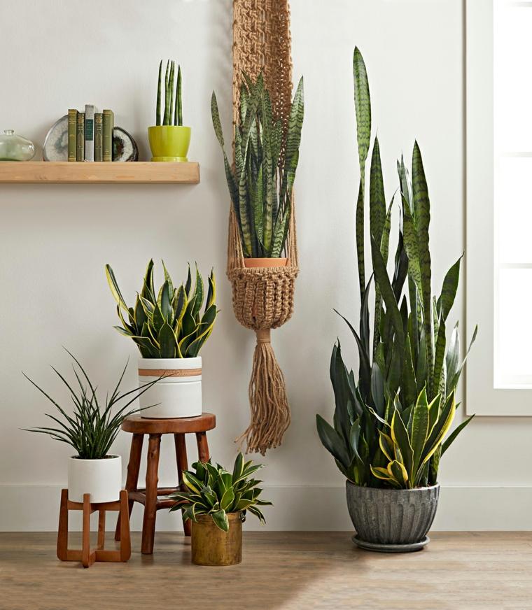 piante grasse da interno poca luce decorazione con vasi di succulente