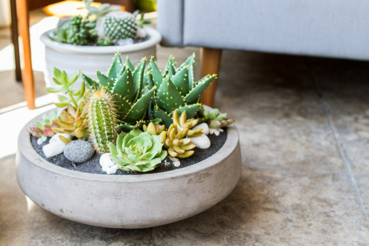 piante grasse da interno poca luce soggiorno decorato con vasi di succulente