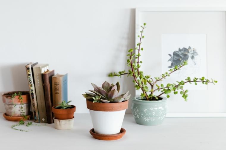 piante grasse da interno vasi di terracotta con succulente decorare la scrivania
