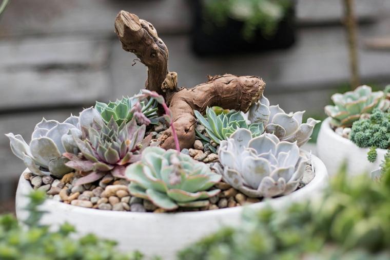 piante grasse senza spine vaso bianco con piante succulente
