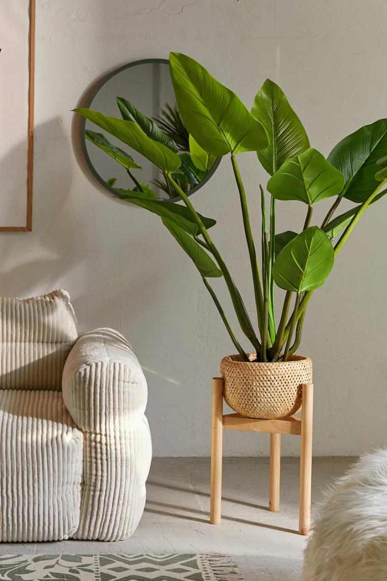 piante ornamentali da interno soggiorno con pianta dalla foglia verde