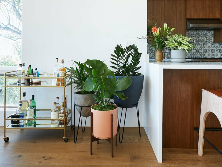 piante sempreverdi da interno pianta dal fogliame largo e verde