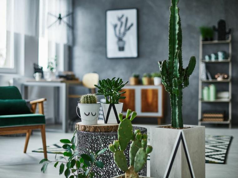 piante succulente soggiorno decorato con vasi di piante grasse cactus