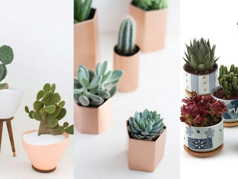 piccoli vasi con succulente piante da appartamento poche cure