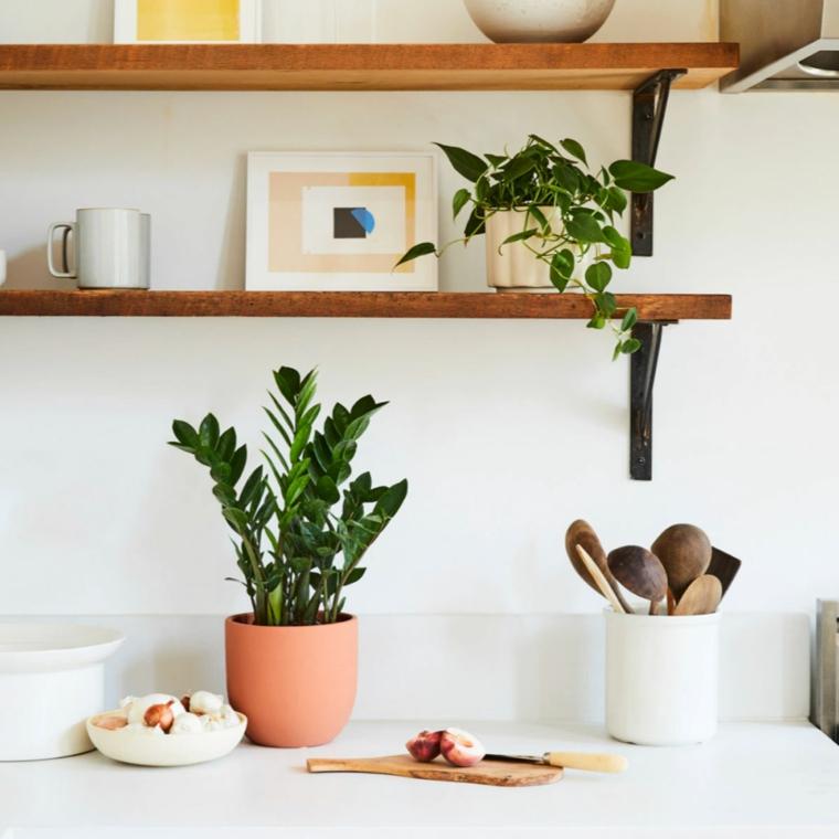 quali piante possono stare in casa mensole di legno con decorazioni