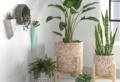 10 Piante eleganti da appartamento: ecco come portare energia all'arredamento di casa!