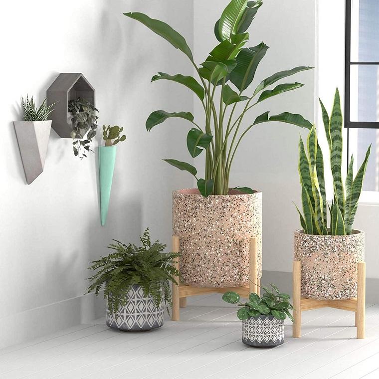 quali piante possono stare in casa pianta a foglia larga vasi in ceramica