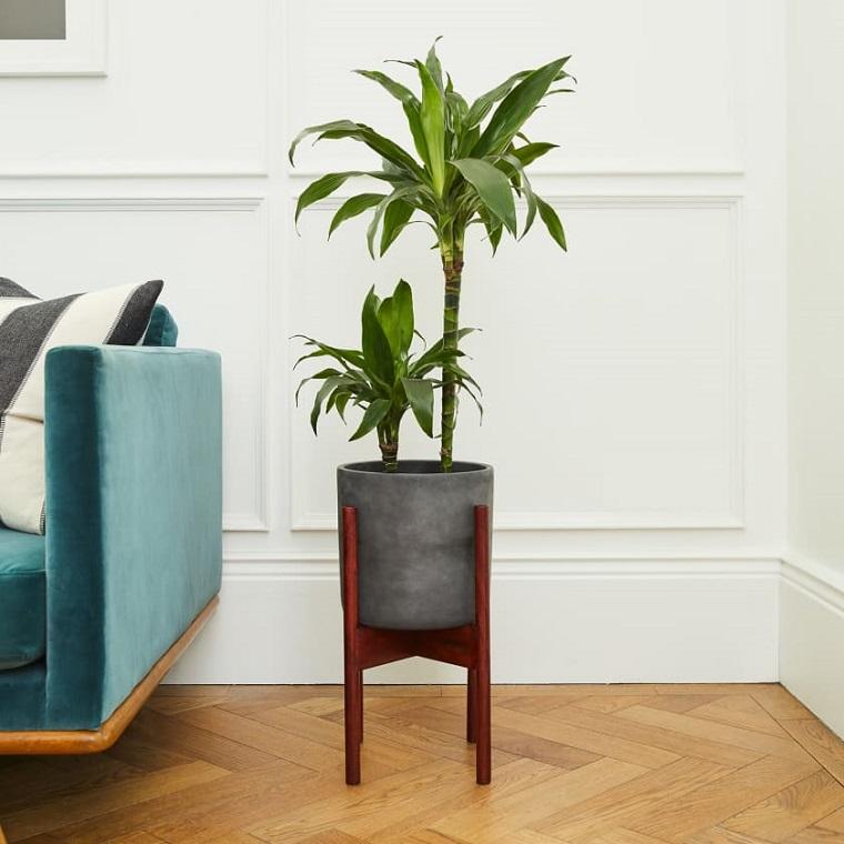 quali sono le migliori piante da appartamento dracena con foglie verdi in soggiorno