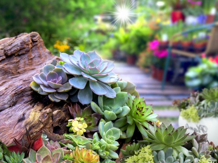 quali sono le piante grasse che resistono al freddo tronco di legno con succulente
