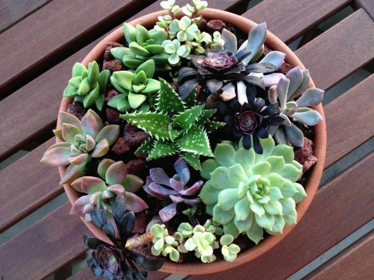 quali sono le piante grasse che resistono al freddo vaso di terracotta con succulente