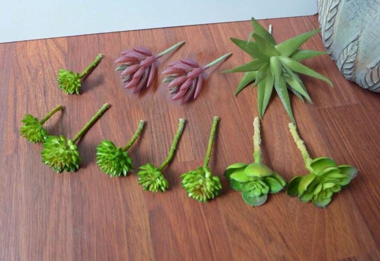 radici di succulente con foglie succose di colore verde come curare le piante grasse