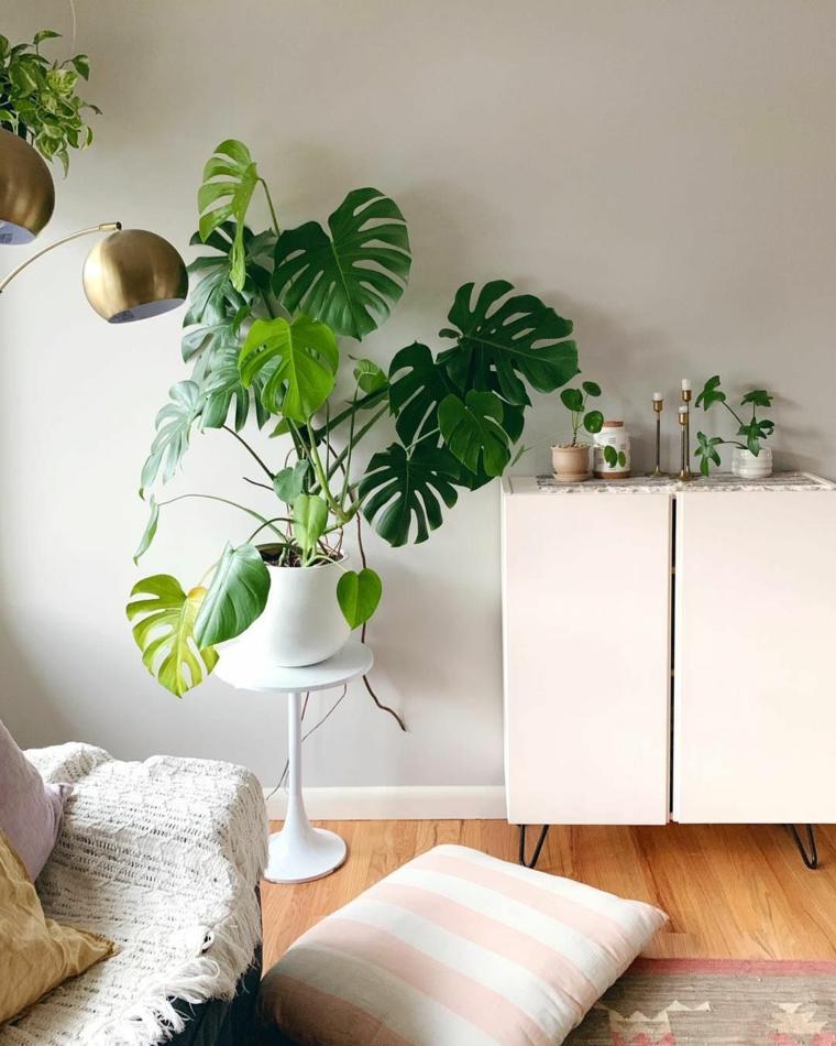soggiorno con pianta dalla foglia verde piante da interno resistenti