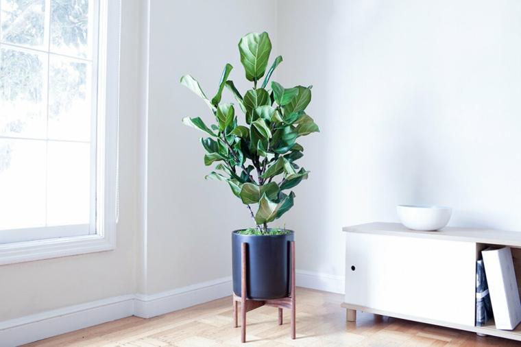 soggiorno con pianta verde piante da appartamento cura mobile basso bianco