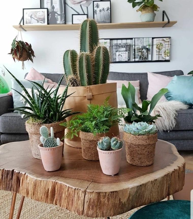 soggiorno con tavolo di legno piante succulente in vasi di terracotta