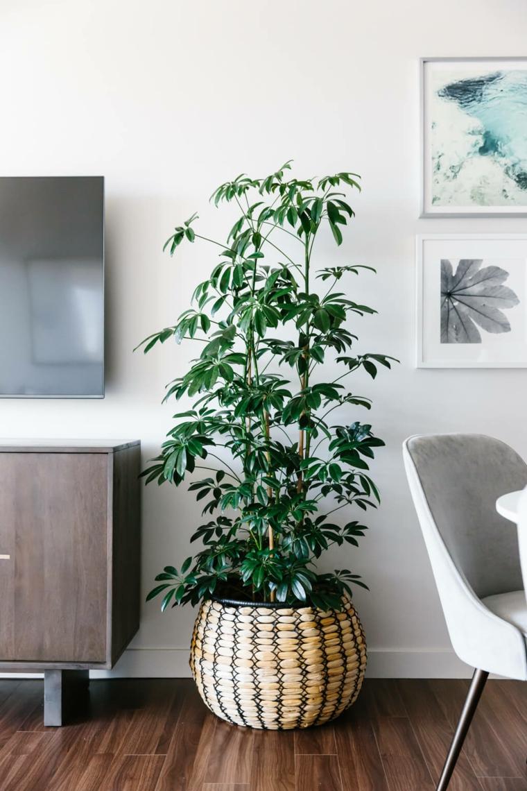 soggiorno decorato con pianta verde decorare casa con vasi di piante