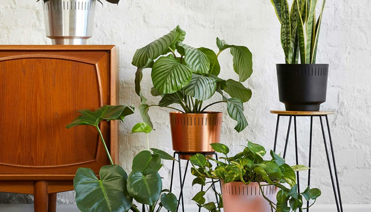 soggiorno decorato con piante dalla foglia larga verdi mobile di legno vintage