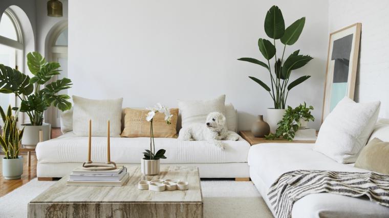 soggiorno decorato con vasi piante a foglia larga da appartamento