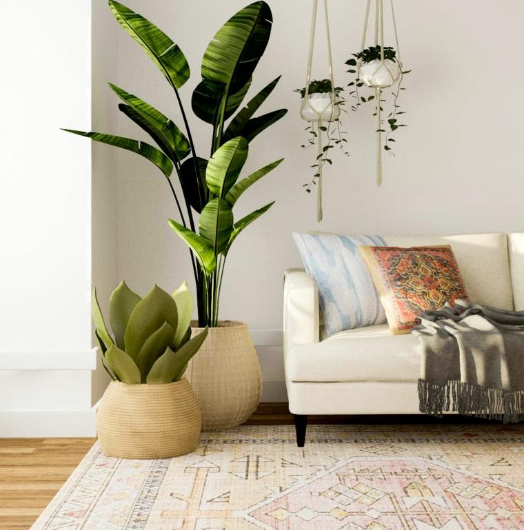 soggiorno decorato con vasi sempreverdi piante da interno foglia larga
