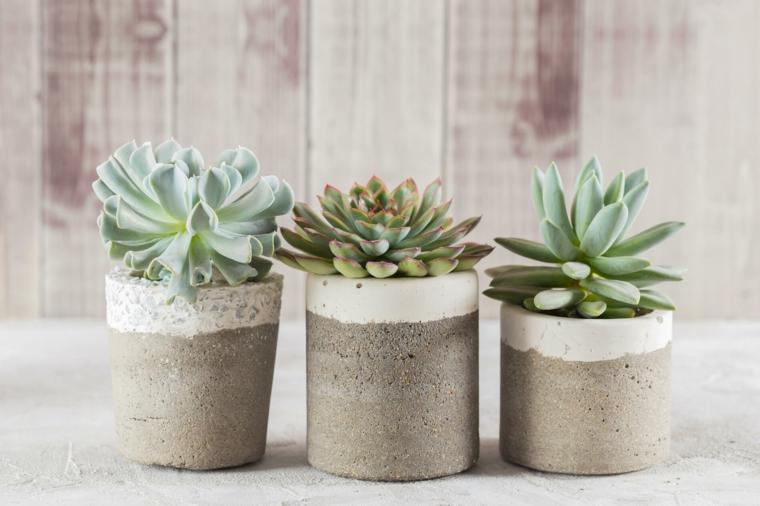 tre vasi con succulente piante grasse senza spine in piccoli contenitori