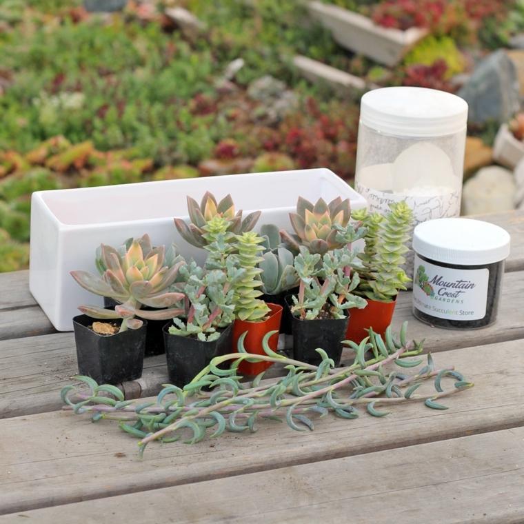 vasi con piante grasse outdoor come trapiante in un giardino roccioso