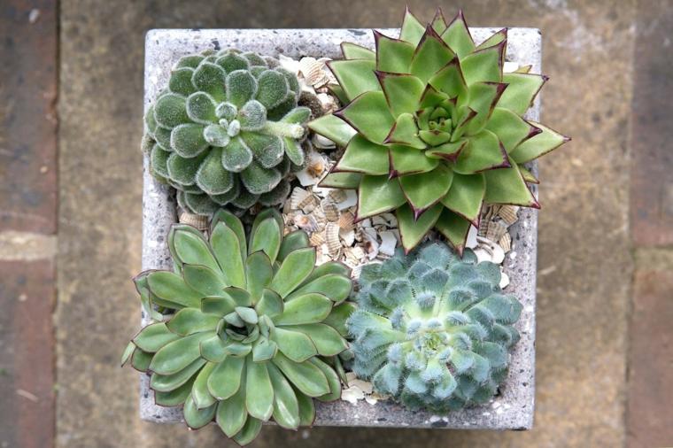 vasi per piante grasse da esterno contenitore di cemento con ghiaia da giardino