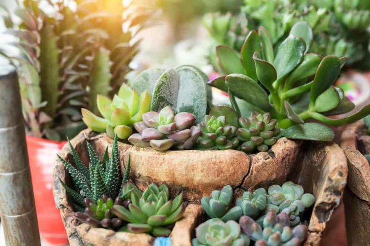 vasi per piante grasse da esterno contenitore di terracotta a livelli