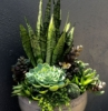 vasi per piante grasse da esterno decorazione giardino con succulente