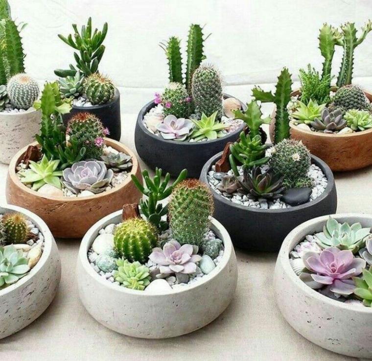 vasi rotondi e bassi di cemento decorazione con piante succulente