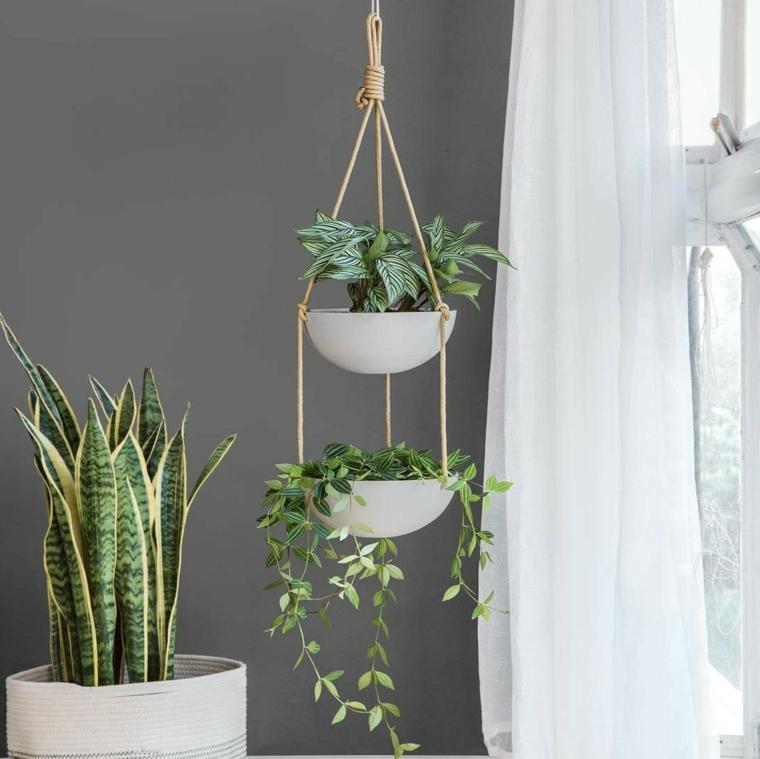vasi sospesi con pianta rampicante piante da appartamento resistenti
