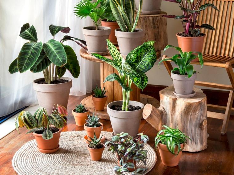 vaso con monstera decorare il soggiorno con piante verdi indoor