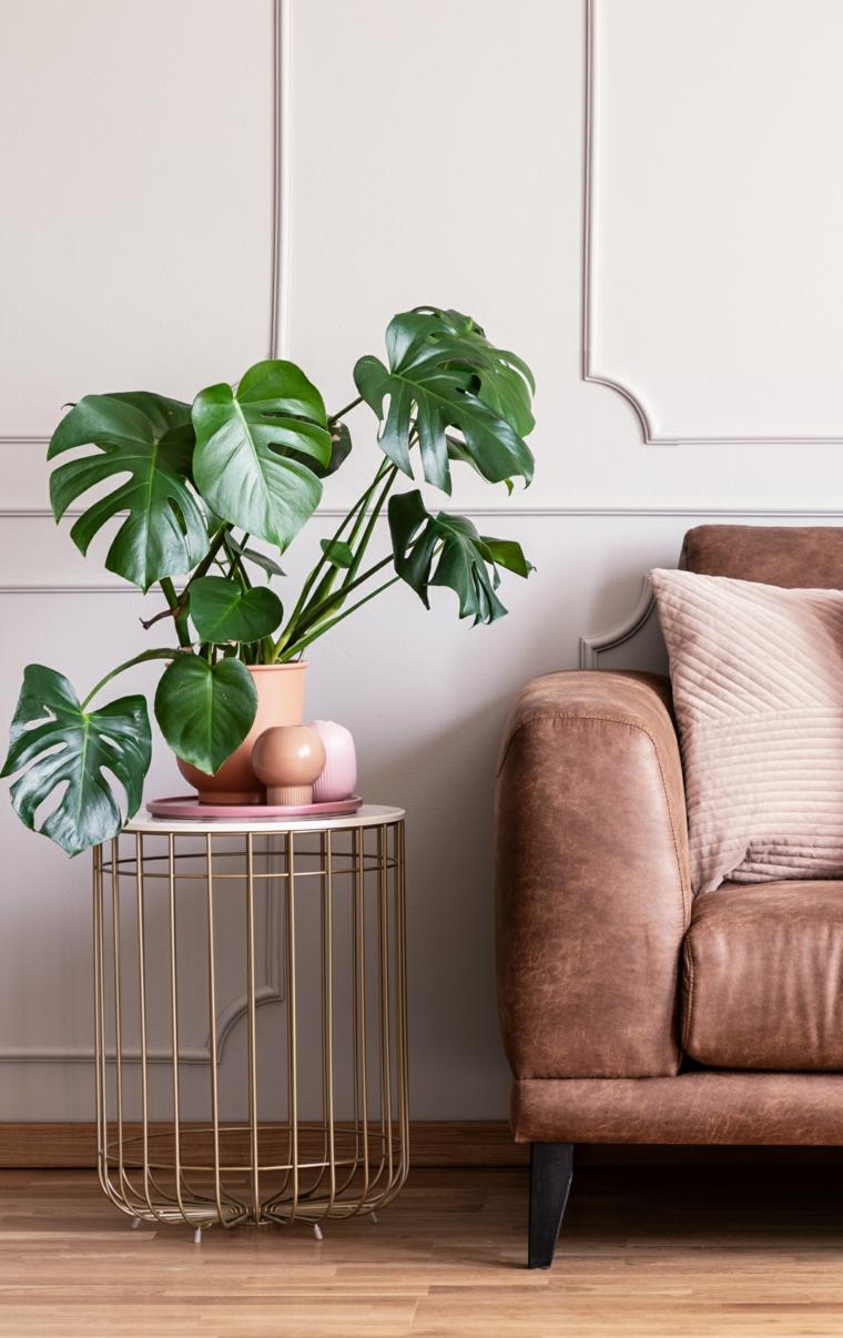 vaso con pianta dalla fogliame largo quali sono le migliori piante da appartamento