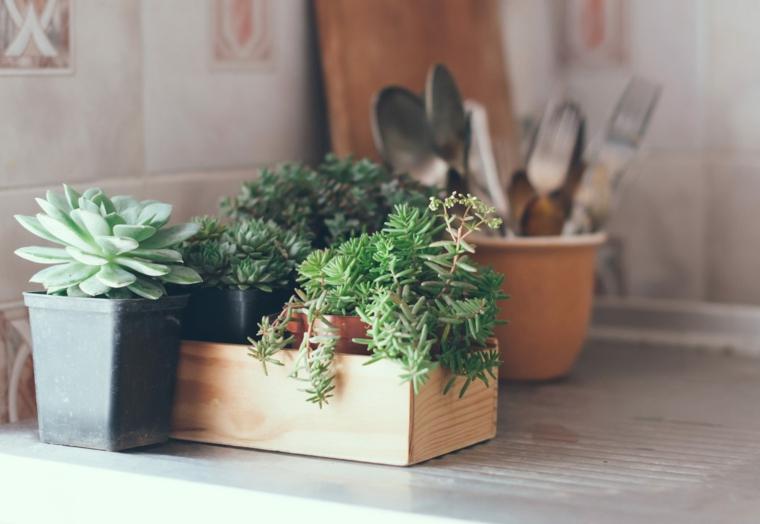 vaso con pianta grassa decorare la cucina con piante succulenti