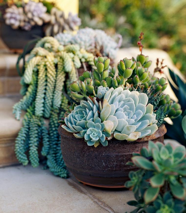 vaso con piante grasse pendenti decorazione scale esterne con vasi