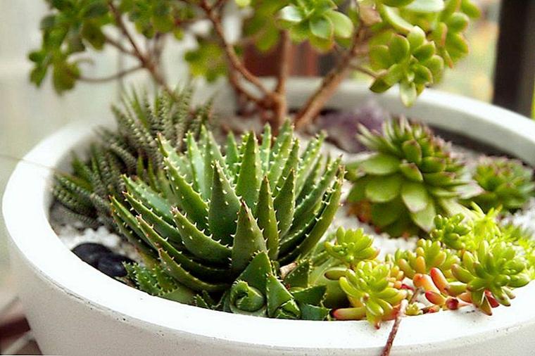vaso di ceramica bianco con succulente piante grasse composizioni originali